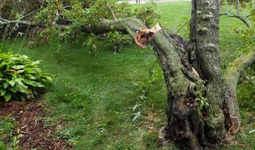 Prepare Your Yard for Hurricane Season