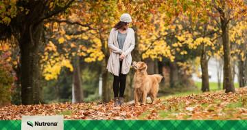 Fall Pet Allergies