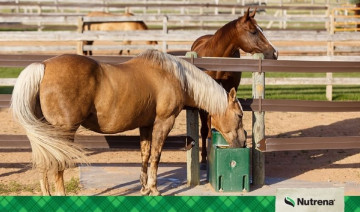 Water-The Most Important Nutrient for Horses