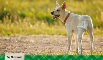 How a Proper Diet Can Benefit Your Dog's Sensitive Skin & Coat