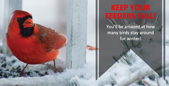 Keep your feeders full