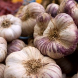 Bulk Garlic