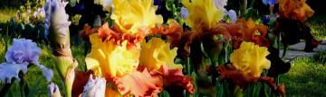 Glorious May!