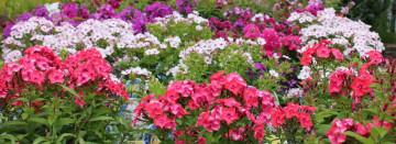 Perennials Make Gardening Easy