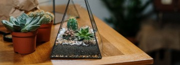 Plant a Terrarium...