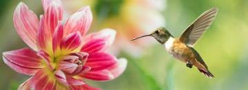 Attract Beautiful Pollinators