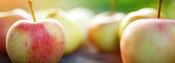 Locally Grown Apples are now in Season!