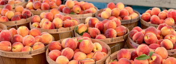 Sweet Michigan Peaches
