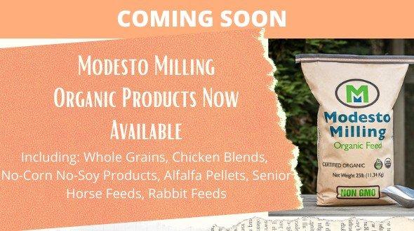 New Product Alert: Modesto Organic
