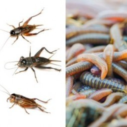 Crickets and Worms for Fishing