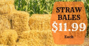 Straw Bales $11.99 each