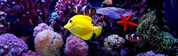 Seven Seas Aquarium