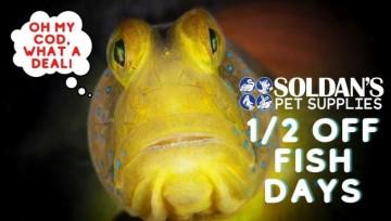 1/2 OFF Fish Days
