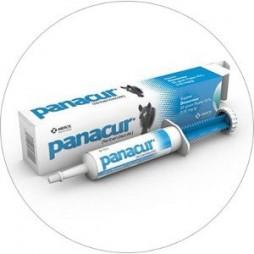 Panacur Paste 25gm Equine Dewormer