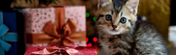 Meowy Christmas & Happy Howlidays