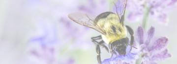 National Pollinators Week is June 21st - 27th