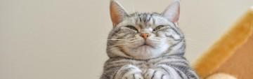 Fancy Cat Adoption Event
