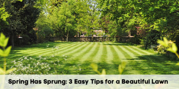 Spring Has Sprung: 3 Easy Tips for a Beautiful Lawn