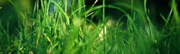 Let Your Lawn Be Green