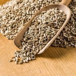 Winter Rye Cover Crop Seed