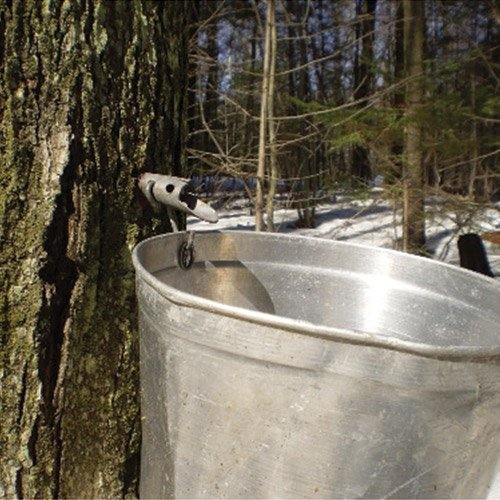 Maple Sugaring Supplies