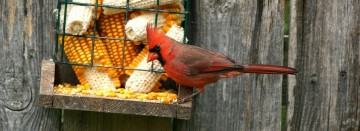 Keep Your Feeders Full!