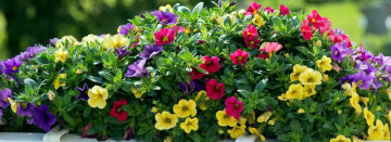 Hanging Baskets and More!