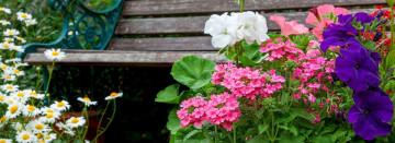 Attract Hummingbirds, Butterflies & Compliments!
