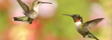 Wild Birds All Season!