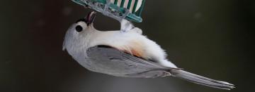 Wild Birds Every Season!