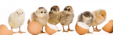 2021 Chick List
