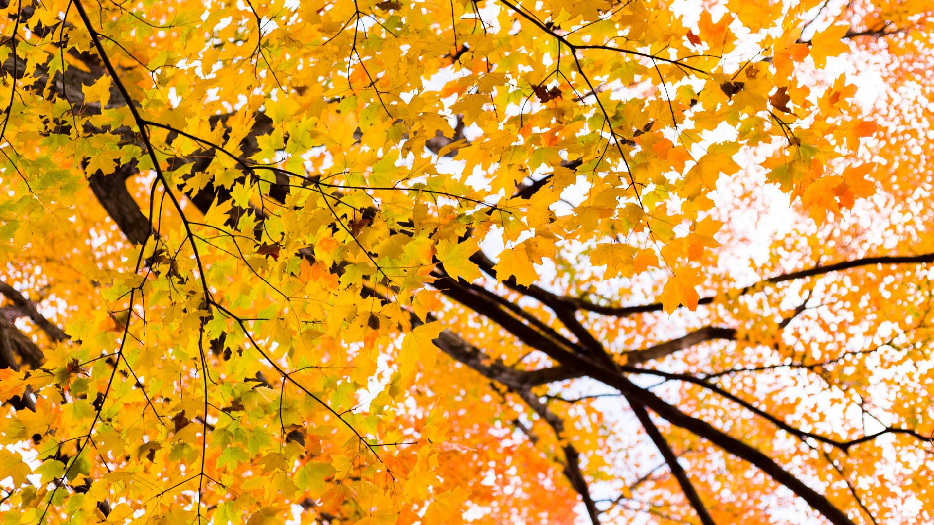 Bbg fall 15