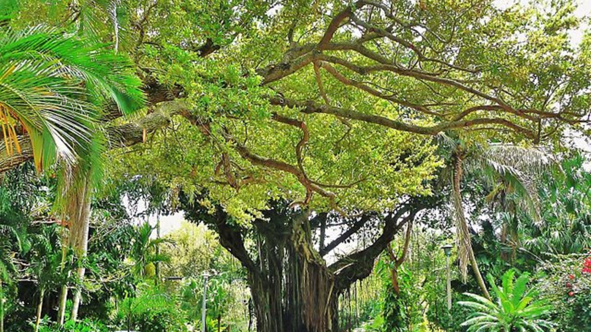 Coconutgrove