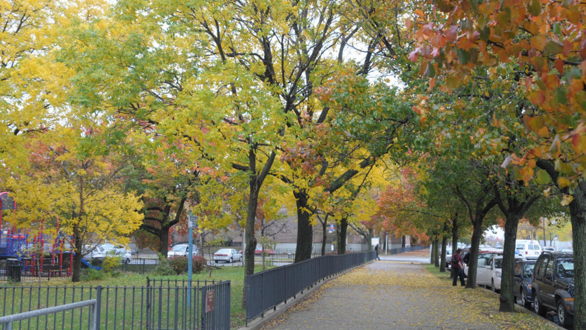 Da3 9642 11 06 08 street trees