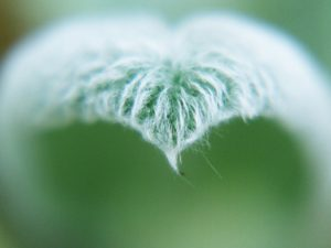 love-leaf