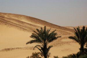 Desert growth