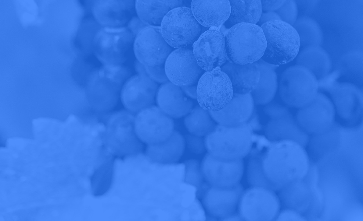 Paon Vineyards