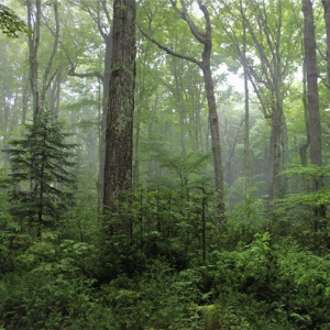 Will trees save the earth? Not a simple solution.