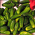 Read more about Preparing Pickles