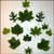 Read more about Exploring Tree Traits