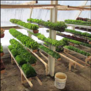 Deep Winter Greenhouses: Eat Fresh Vegetables Year-Round