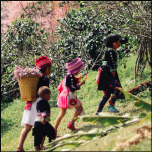 "Hmong and the Relation of ""Miao"""