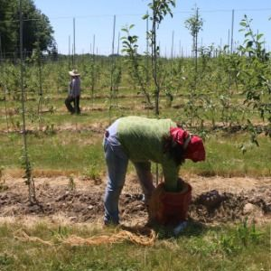 Lawmakers pass bill granting farm laborers long-denied protections