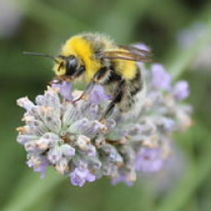 Proposed legislation would protect honey bees in New York state