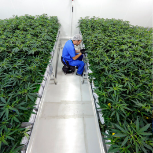 Grower: 5,000 patients in Louisiana medical marijuana program so far