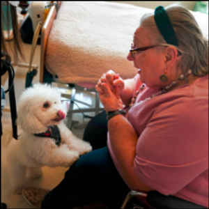 Dogs ease pandemic isolation for nursing home residents