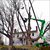 Read more about One of country's largest sugar maples removed for safety