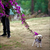 Read more about When it comes to heated divorce, pets aren't people too