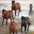 Read more about Wild horse roundups ramping up as drought grips the US West