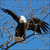 Read more about US report: Bald eagle populations soar in lower 48 states